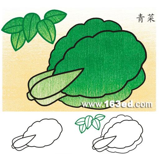 幼儿蔬菜简笔画:青菜