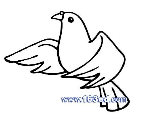 鸟类简笔画 和平鸽3 高清图片