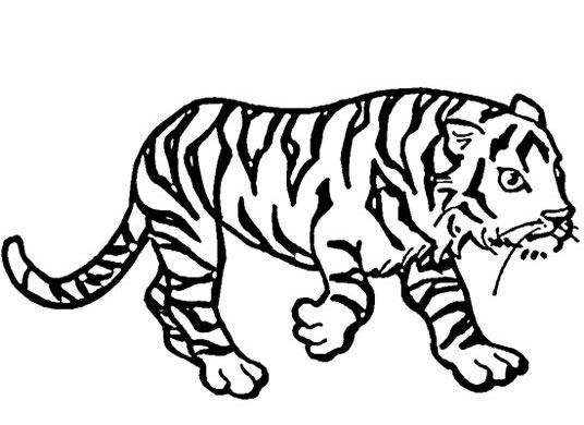 幼儿简笔画:老虎17-简笔画网 【老虎简笔画】儿童简笔画老虎_老虎