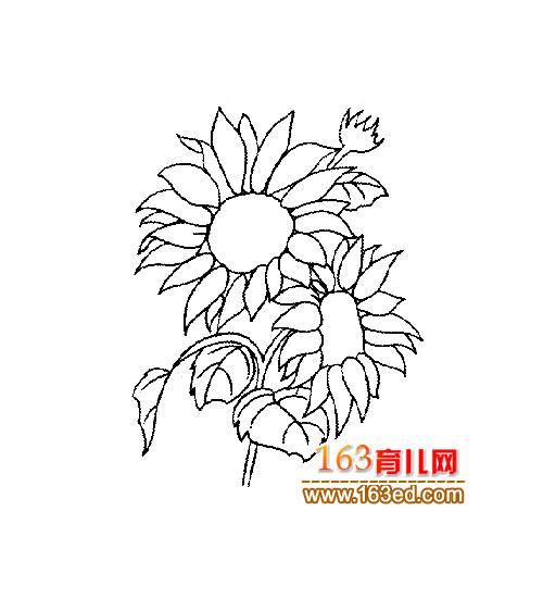 简笔画 向日葵1