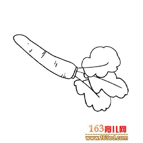 简笔画 胡萝卜2