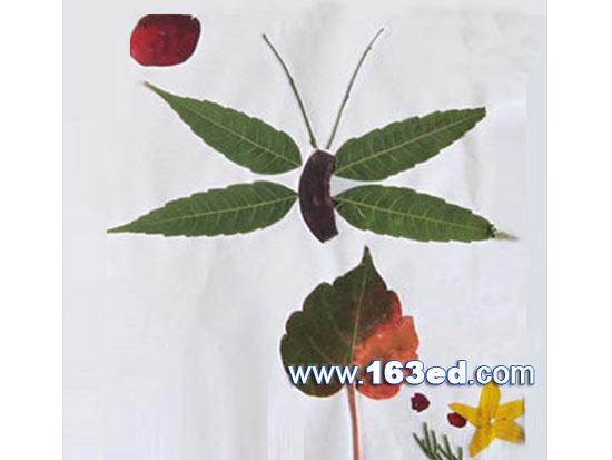树叶粘贴画昆虫篇 蝴蝶20