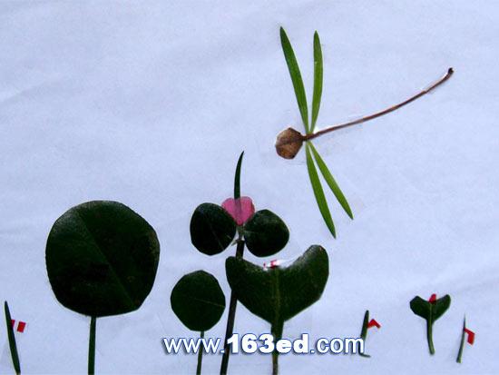 树叶粘贴画昆虫篇 蜻蜓3